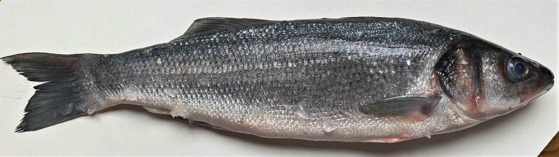 Kalan Suomustus